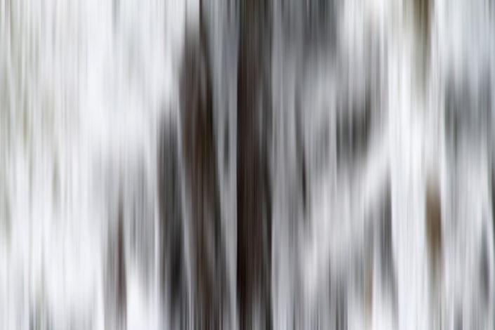 Baum_Gratofafie_063