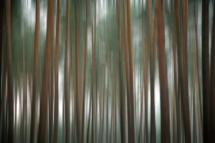 Baum_Gratofafie_080