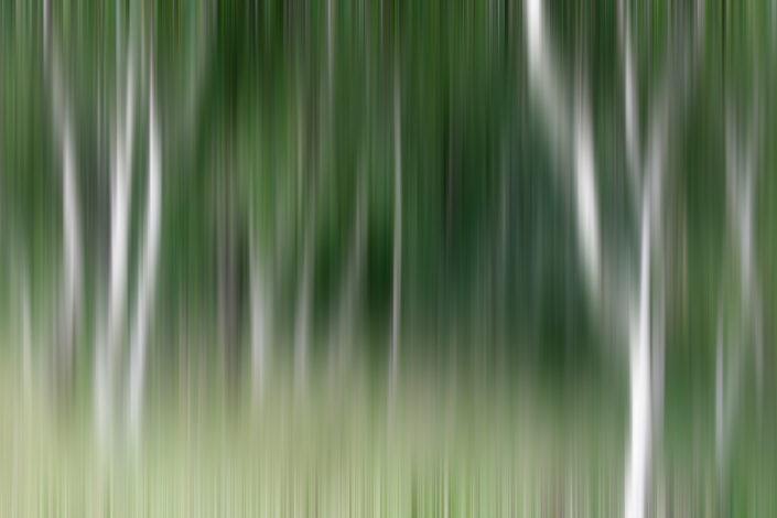 Baum_Gratofafie_105