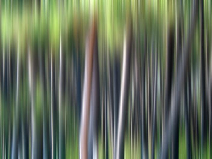 Baum_Gratofafie_117