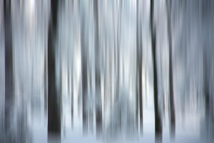 Baum_Gratofafie_121