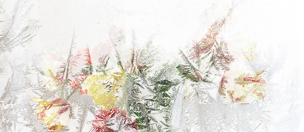 Gratofafie, Blumen