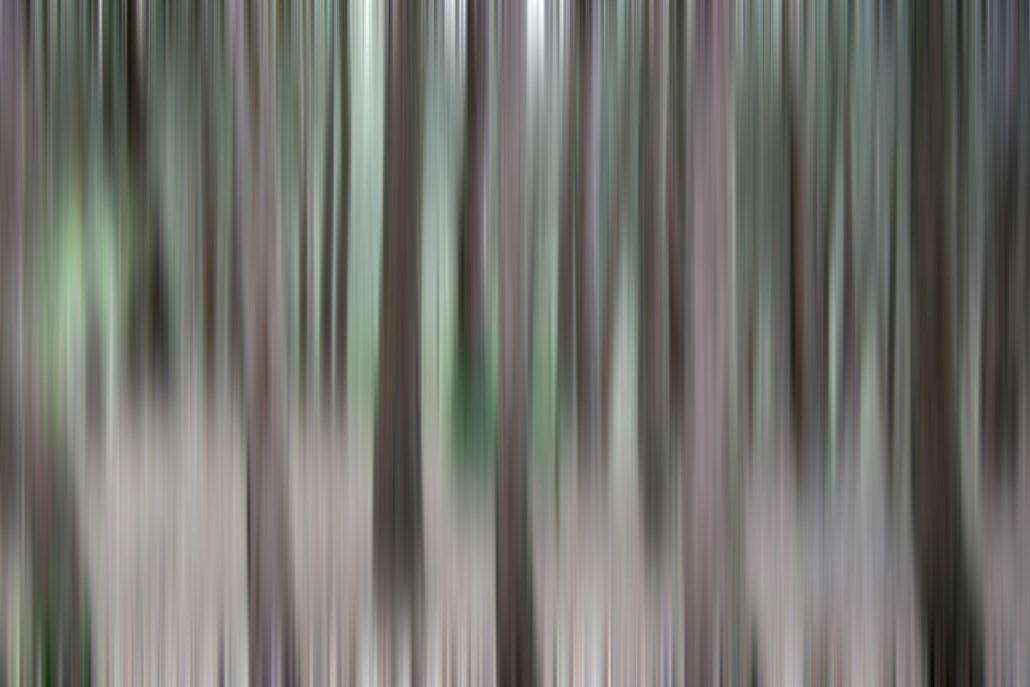 Baum_Gratofafie_060