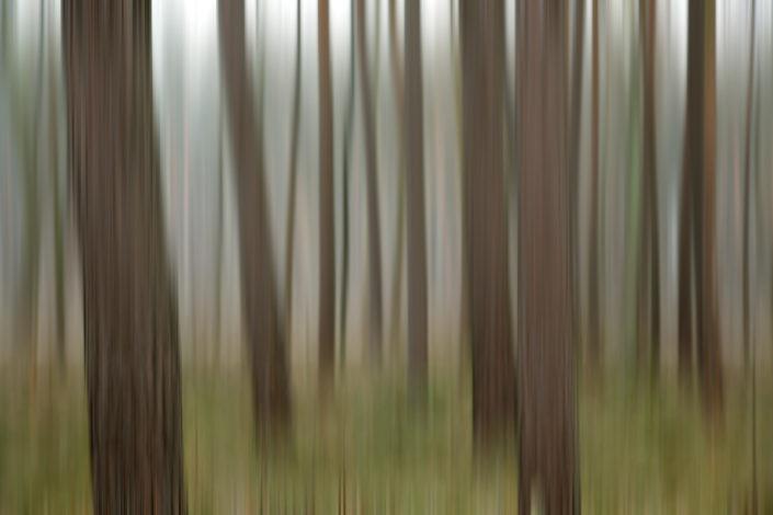 Baum_Gratofafie_071