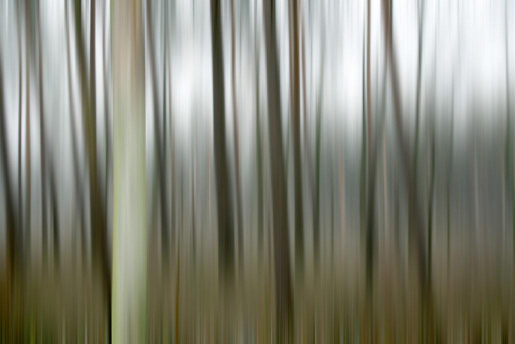 Baum_Gratofafie_072