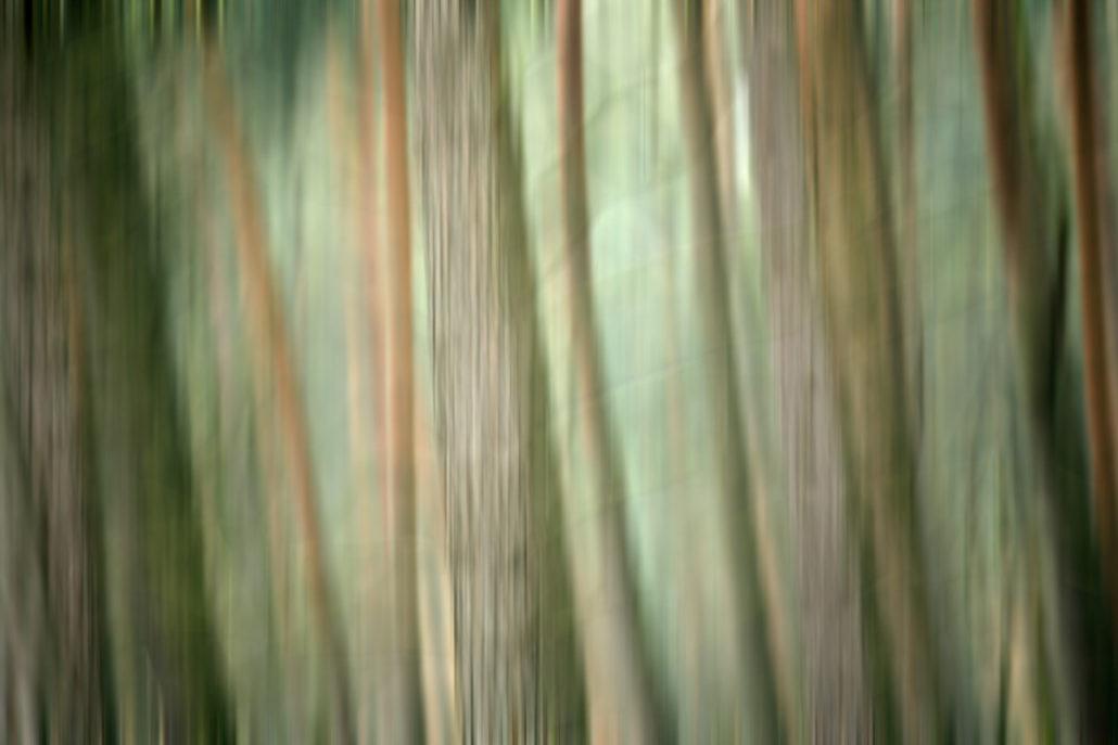 Baum_Gratofafie_079