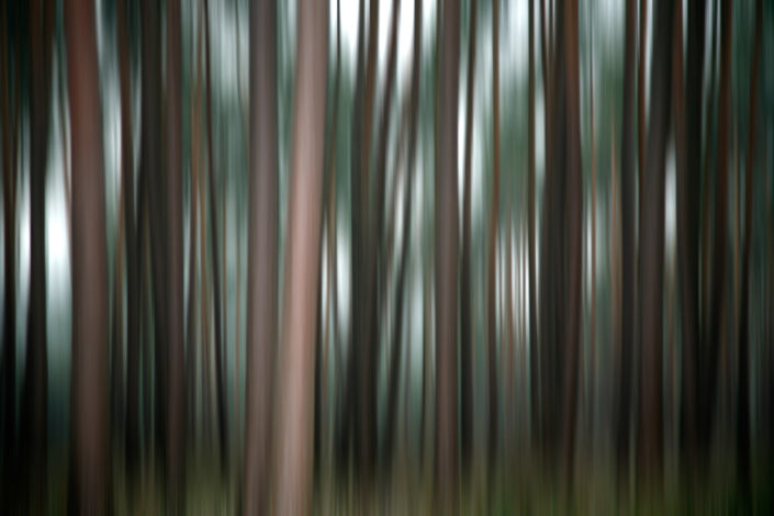 Baum_Gratofafie_081