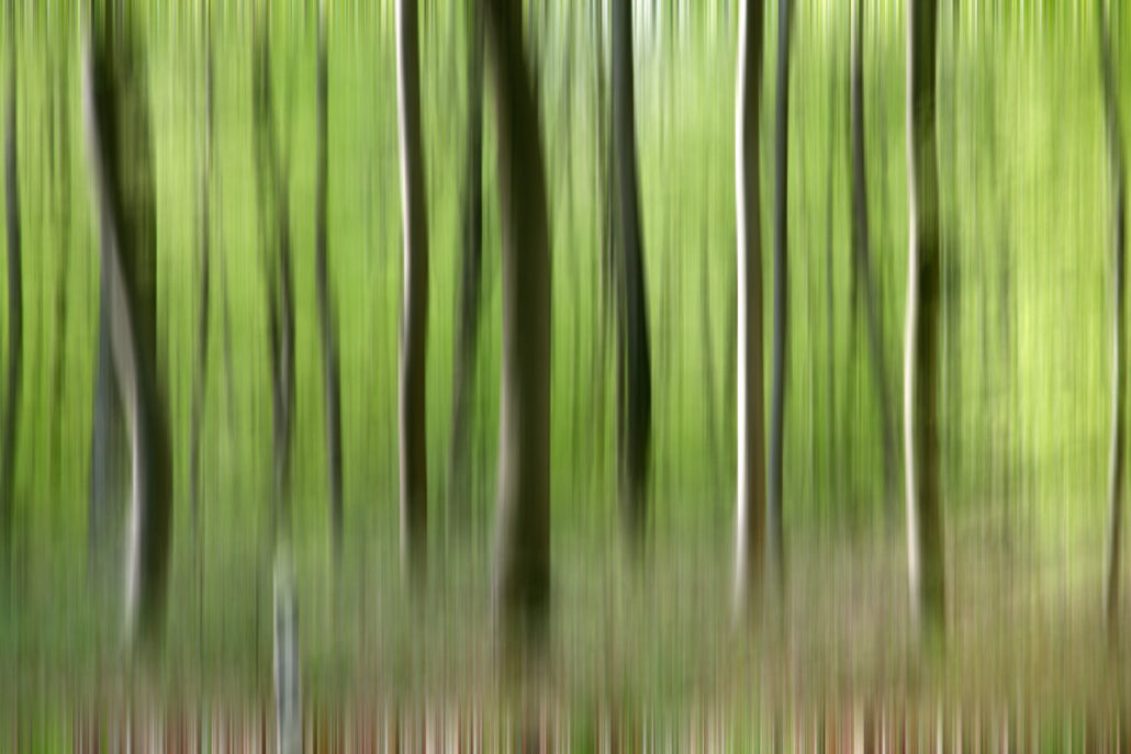 Baum_Gratofafie_087