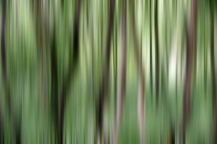 Baum_Gratofafie_103