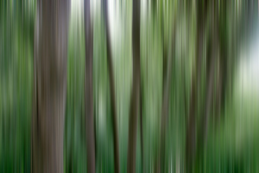 Baum_Gratofafie_104