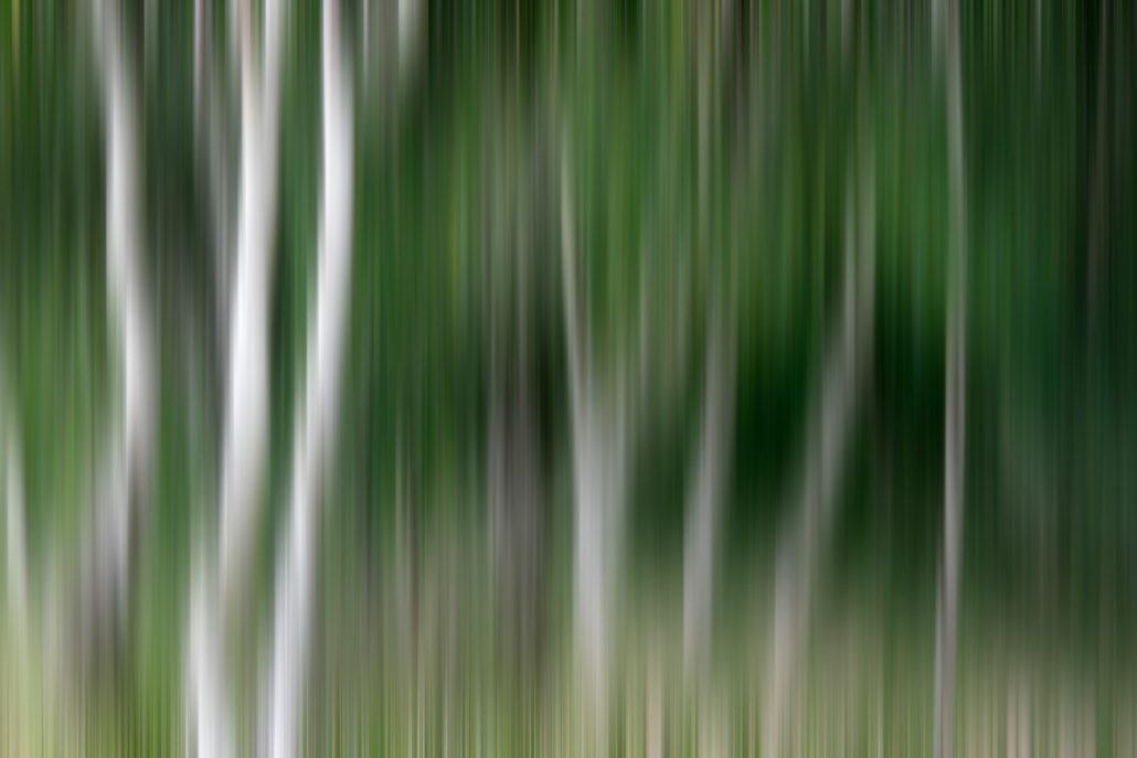 Baum_Gratofafie_106