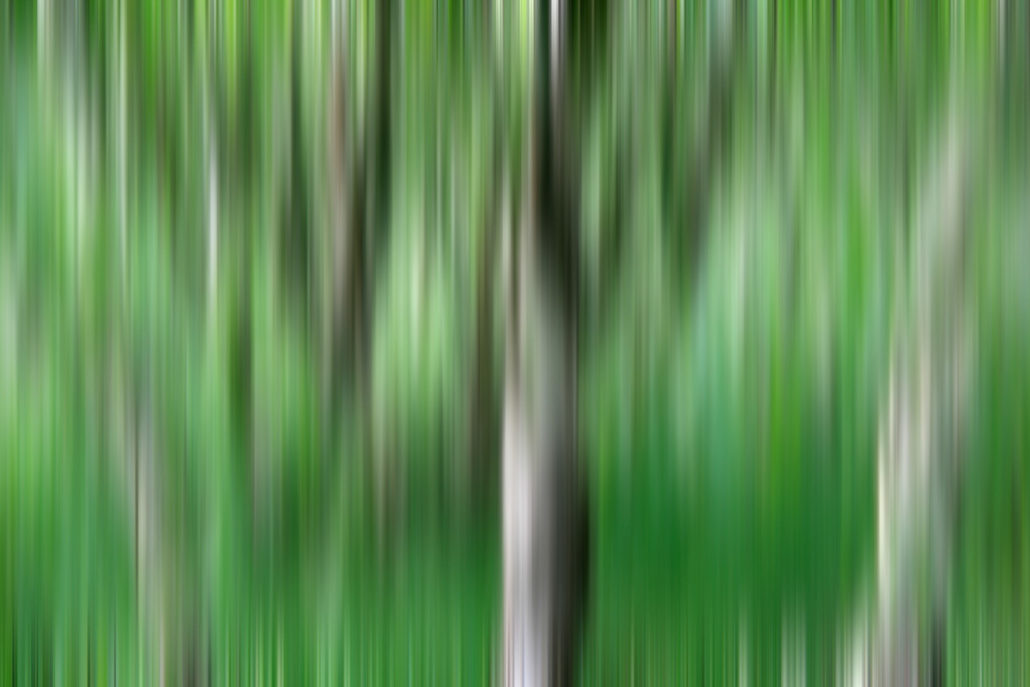 Baum_Gratofafie_107