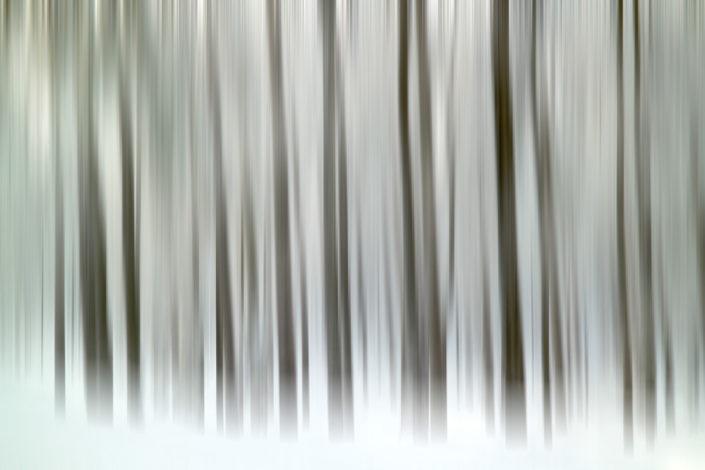 Baum_Gratofafie_119