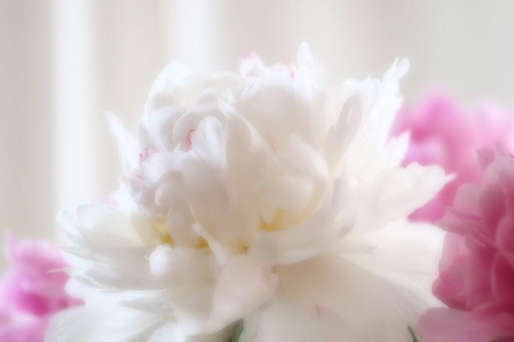 Blume_Gratofafie_143