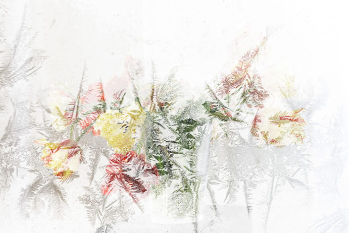 Blume_Gratofafie_144