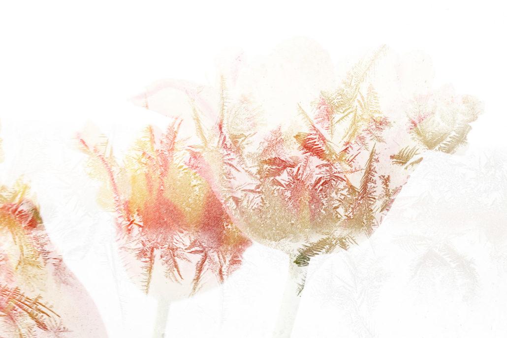Blume_Gratofafie_146