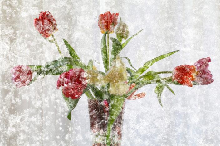 Blume_Gratofafie_150