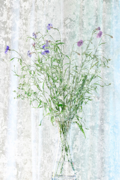 Blume_Gratofafie_152