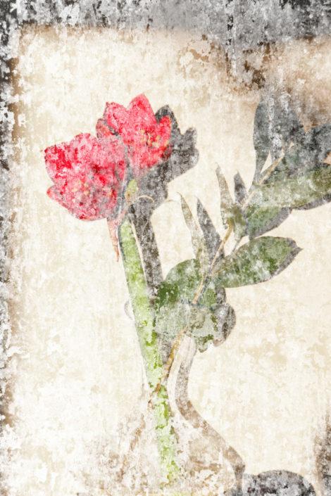 Blume_Gratofafie_153