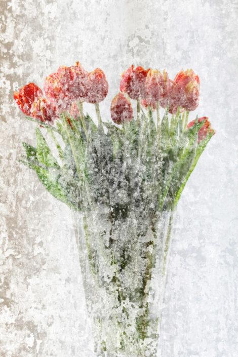 Blume_Gratofafie_155