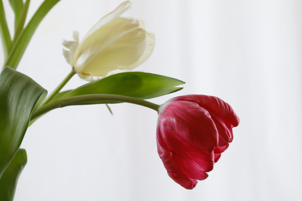 Blume_Gratofafie_164