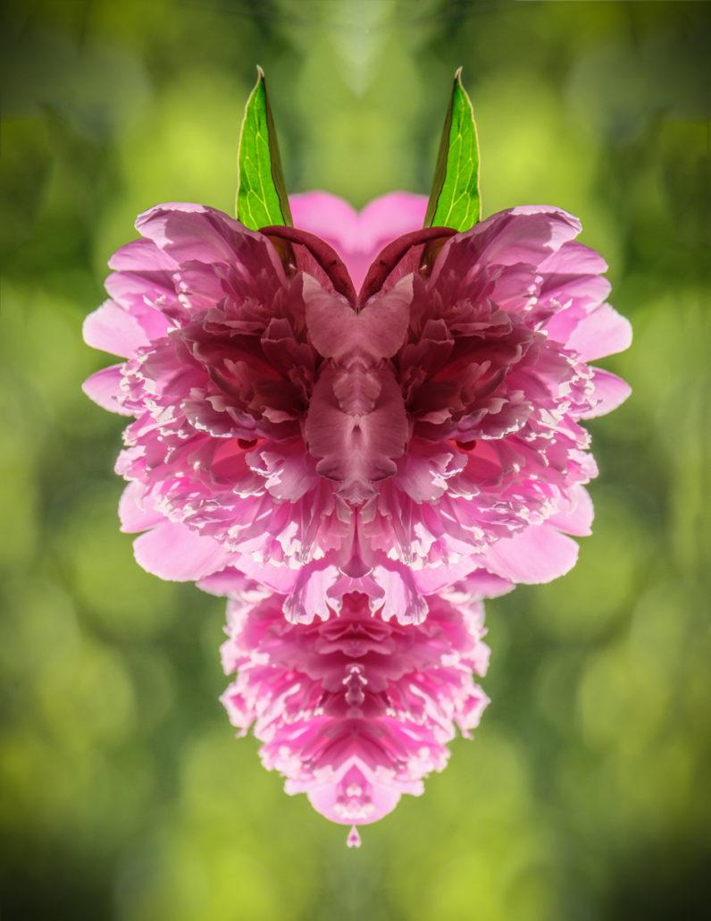 Flora_Fauna_Gratofafie_326