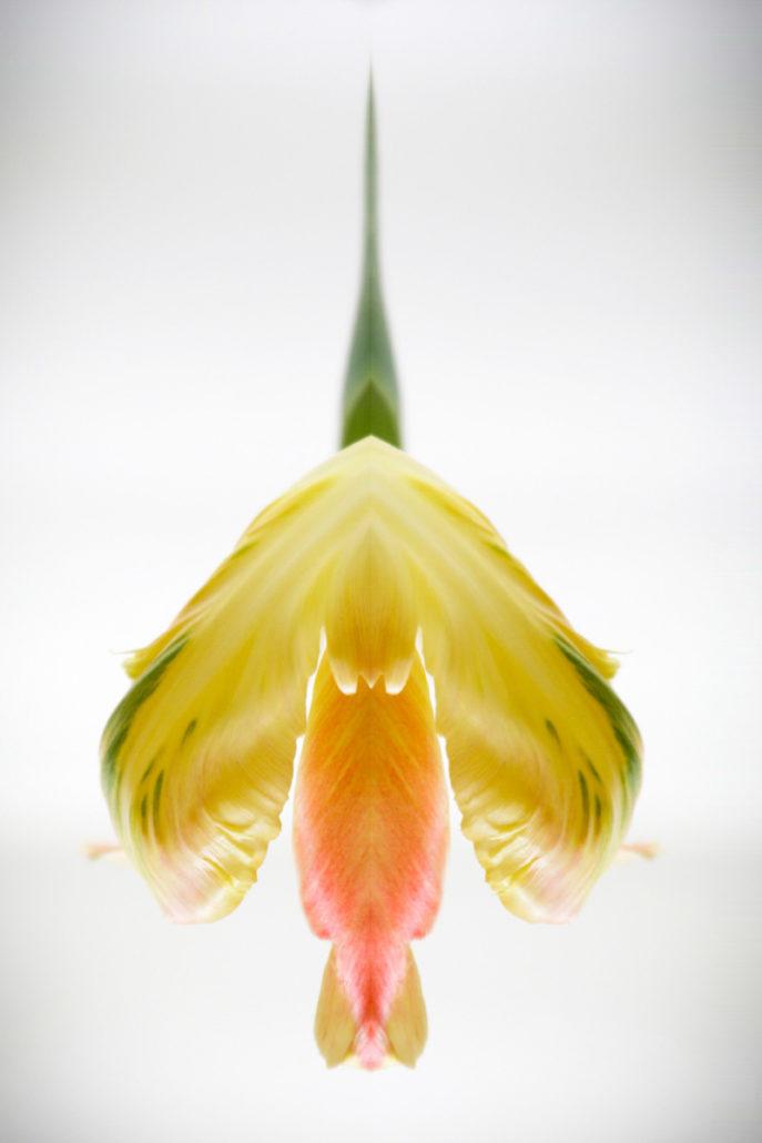 Flora_Fauna_Gratofafie_344